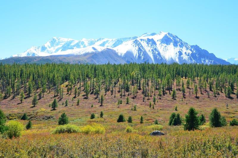 La Russie, République d'Altai, plateau Yoshtykyol dans le jour nuageux photos libres de droits