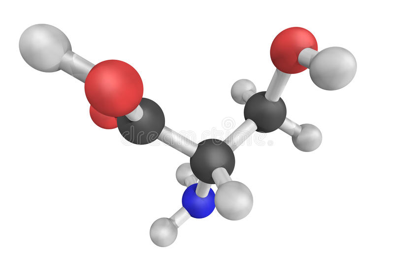 La sérine, codée par les codons UCU, UCC, UCA, UCG, AGU et CAG est image libre de droits