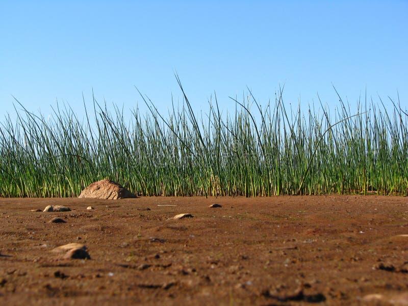 La sabbia e l'erba sulla costa fotografie stock libere da diritti