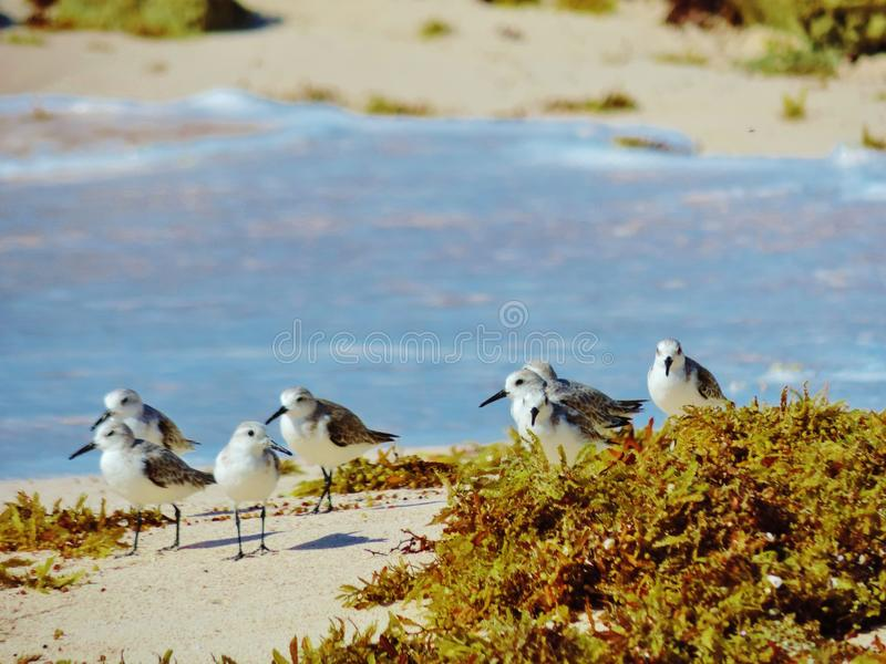 La sabbia zampetta immagine stock