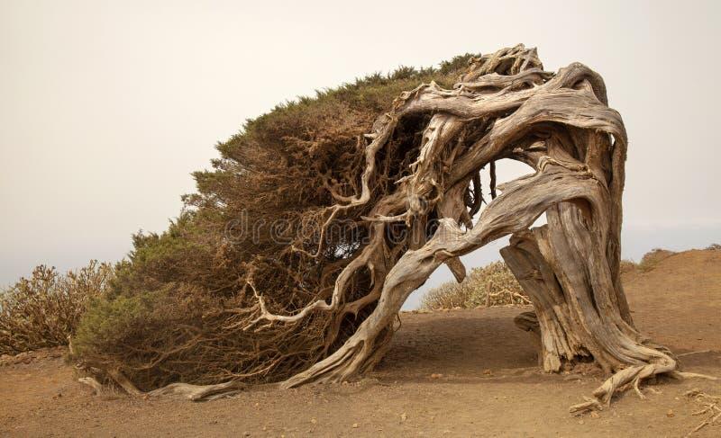 La Sabina The Juniper Tree Stock Image Image Of Ground Must