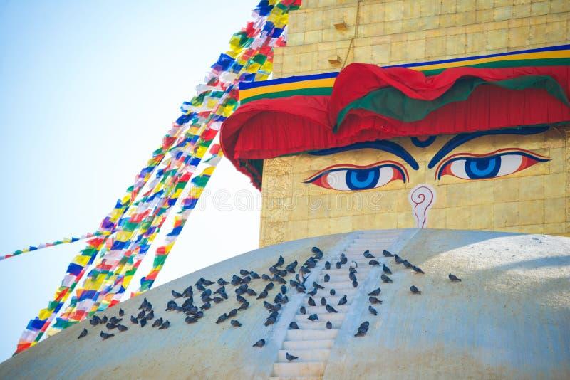 La saggezza osserva sul punto di riferimento di stupa di Boudhanath del Nepal fotografia stock