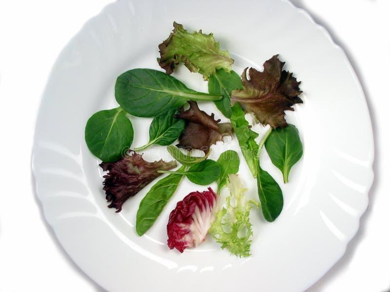 La salade de chéri verdit 2 photo libre de droits