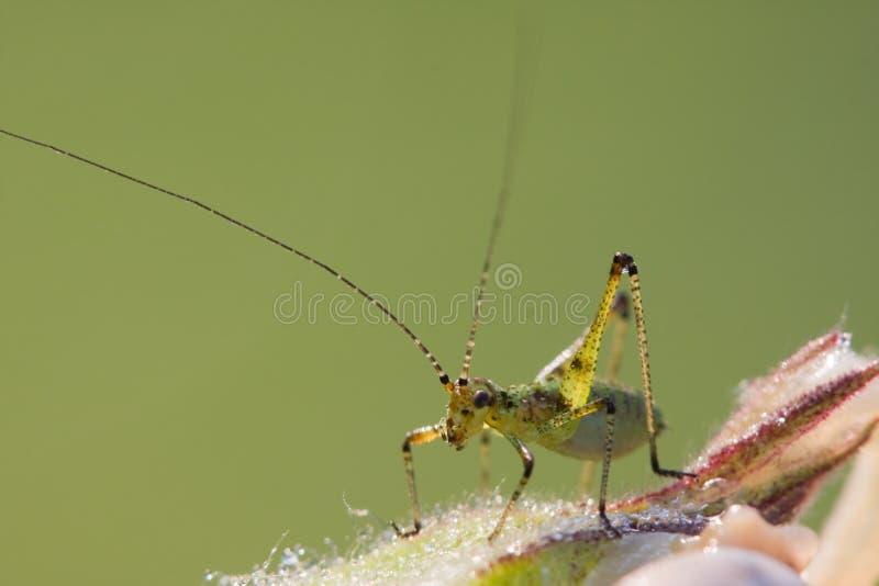 La sauterelle et l'escargot image libre de droits