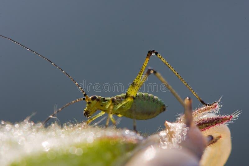 La sauterelle et l'escargot photo libre de droits