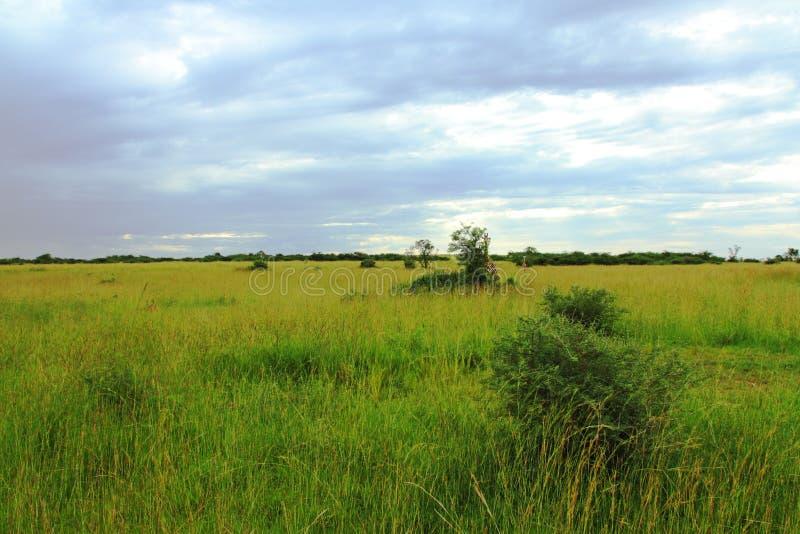 La savane ougandaise orageuse image libre de droits
