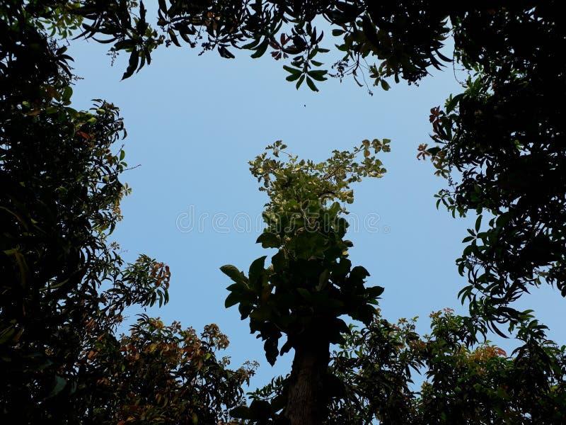 La scène avec un des quatre arbres dans le ciel images libres de droits