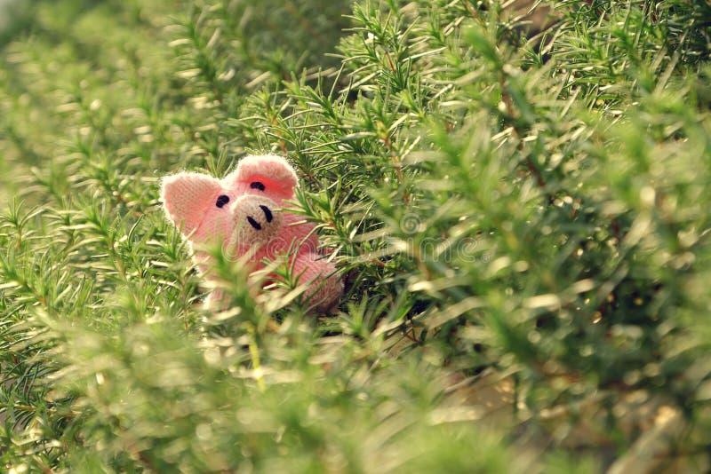 Branchement de la peau de porc