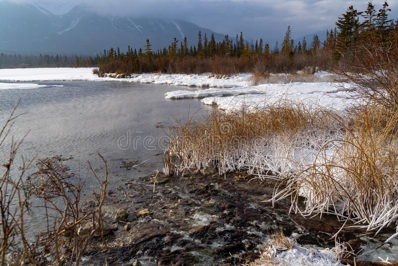 La scena congelata dell'inverno alla strada panoramica dei laghi vermillion nel parco nazionale di Banff, con le erbe innevate, s immagine stock libera da diritti