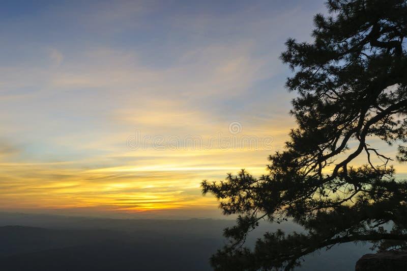La scena della siluetta del pino immagini stock