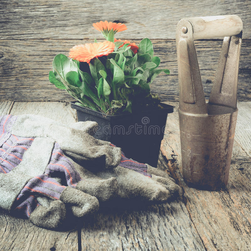 La scena di giardinaggio/strumenti con i guanti ed il fiore con stile di Instagram filtrano Il raccolto quadrato fotografia stock