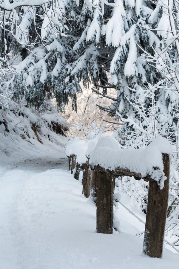 La scena idilliaca della strada campestre innevata e vecchi di legno recintano la foresta fotografia stock
