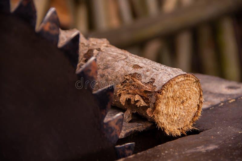 La scie circulaire moissonnait le bois de chauffage pour l'hiver photos libres de droits