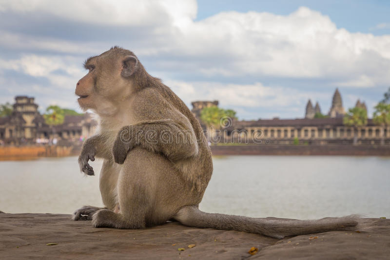 La scimmia a Angkor era, la Cambogia immagini stock