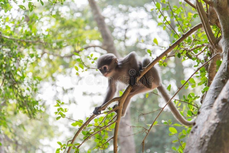 La scimmia del bambino sta appendendo sull'albero immagini stock libere da diritti