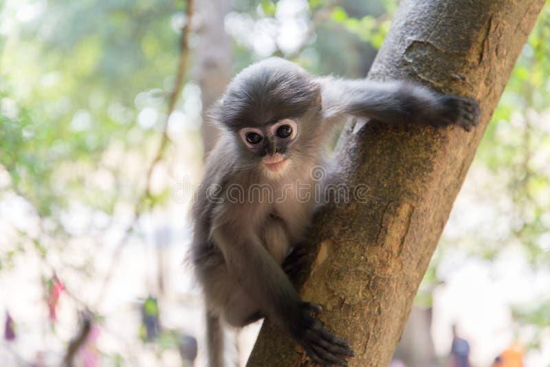 La scimmia del bambino sta appendendo sull'albero fotografia stock libera da diritti