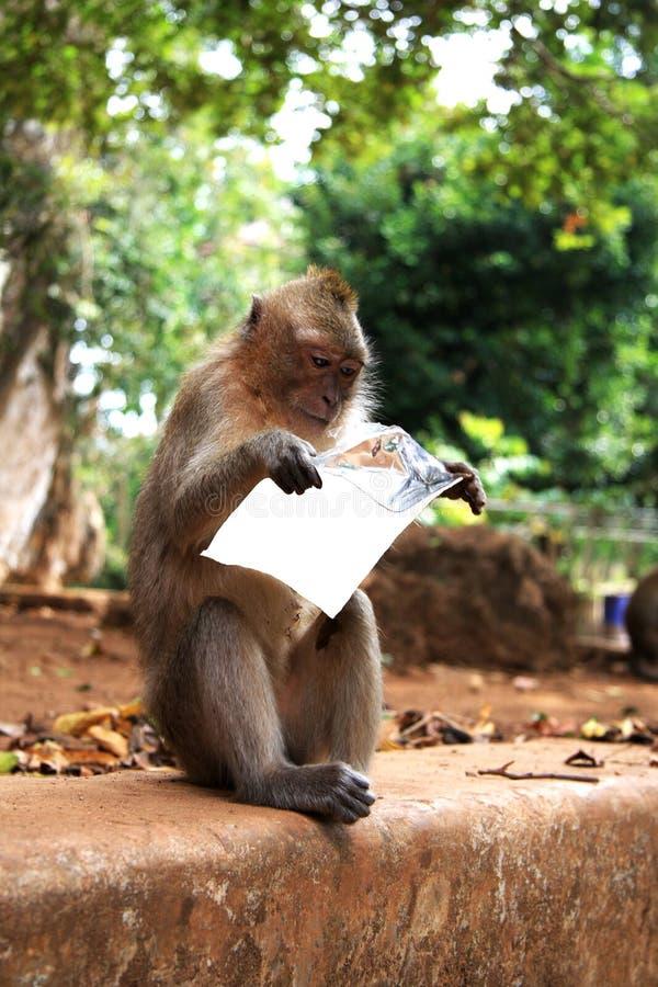 La scimmia della lettura. immagini stock libere da diritti