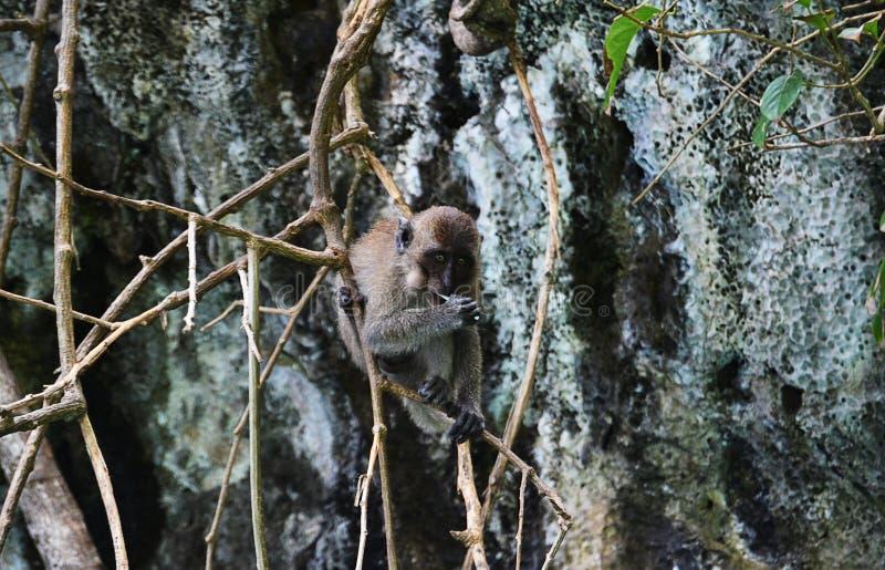 La scimmia e la lecca-lecca fotografia stock libera da diritti