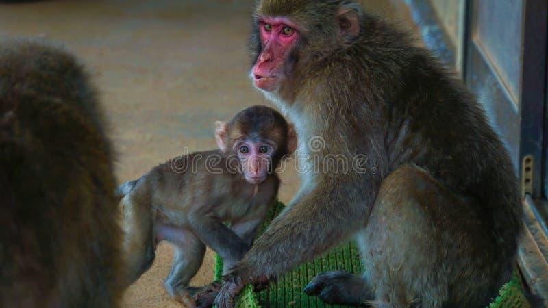 La scimmia ed il bambino fotografia stock libera da diritti
