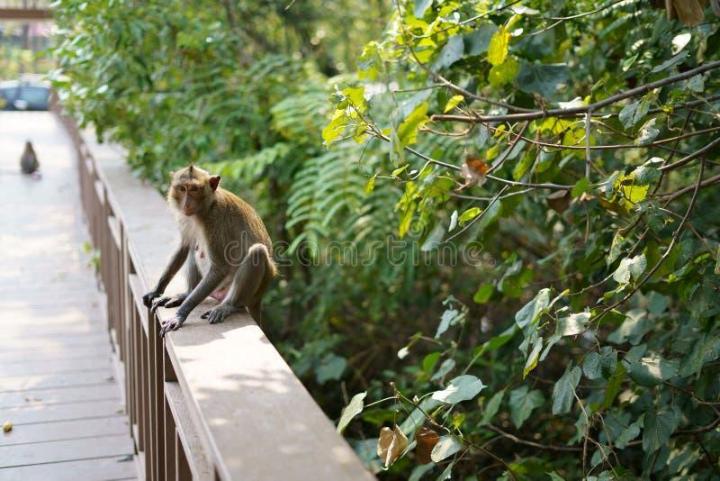 La scimmia sta cercando qualcosa fotografia stock