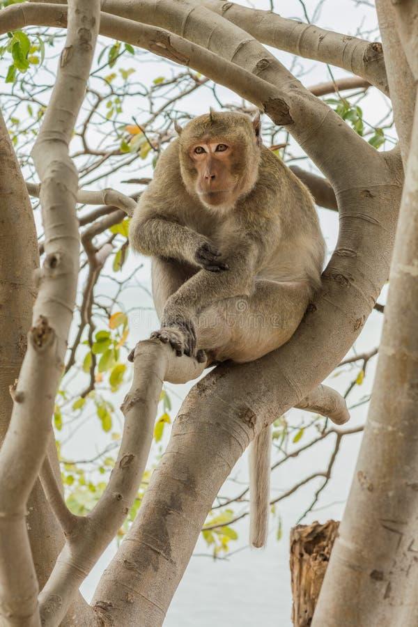 La scimmia sull'albero fotografie stock libere da diritti