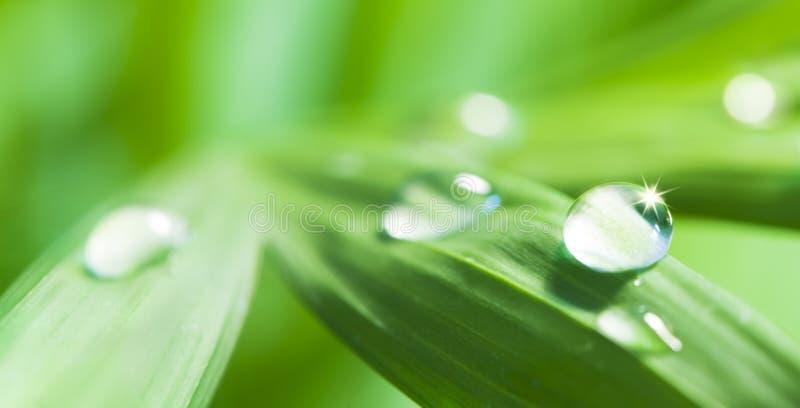 La scintilla cade dell'acqua sulla foglia verde fotografia stock
