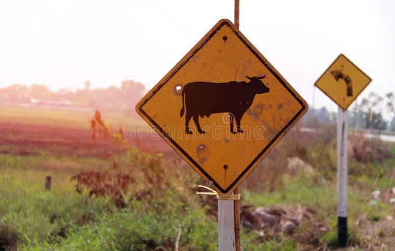La señal de tráfico para se guarda de la vaca a través de la calle en Tailandia y hacia fuera enfoca la muestra dejada vuelta imágenes de archivo libres de regalías