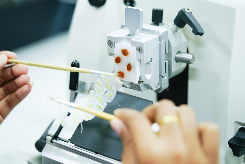 La section rotatoire de microtome pour le diagnostic en pathologie font le microsc images libres de droits