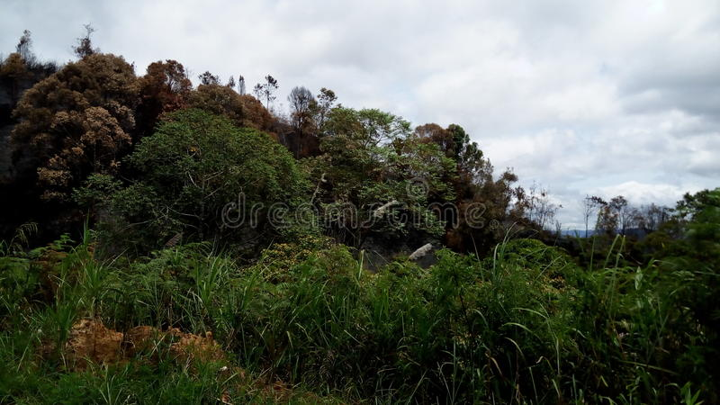 La selva fotos de archivo