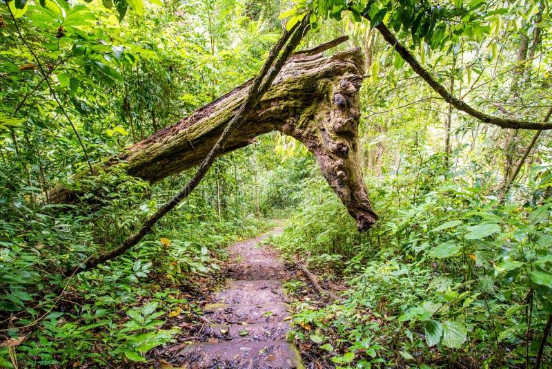 La selva de la Tailandia fotos de archivo libres de regalías