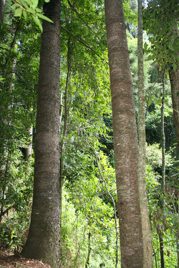 La selva tropical fotografía de archivo libre de regalías