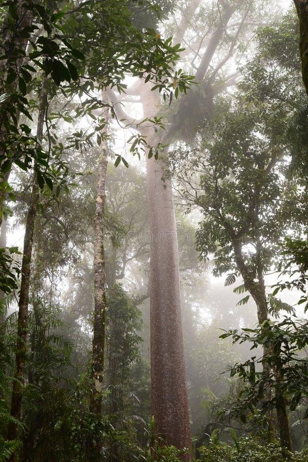 La selva tropical Barron Gorge National Park queensland australia imagenes de archivo