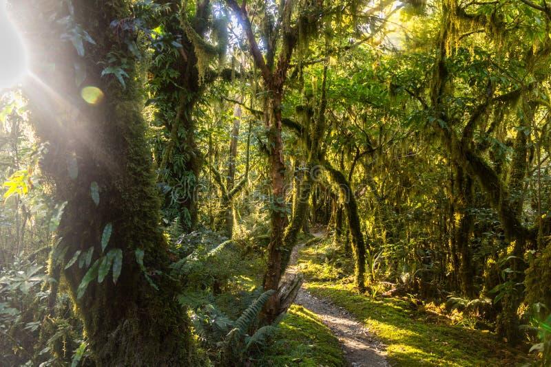 La selva tropical en la pista de Milford en Nueva Zelanda con el sol irradia el brillo a través del follaje imagenes de archivo