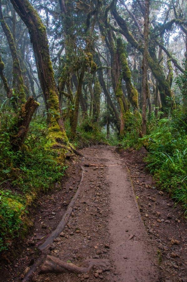 Download La Selva Tropical, Kilimanjaro Foto de archivo - Imagen de montaña, ruta: 41912426