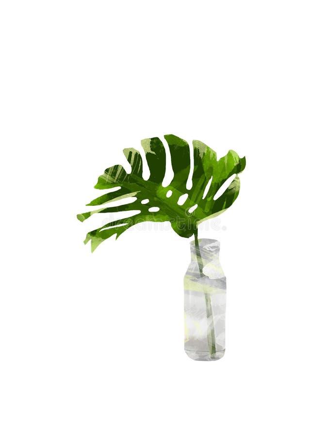 La selva tropical pintada a mano Monstera se va en la botella o el florero aislado en el fondo blanco Clip art botánico floral pa imagen de archivo