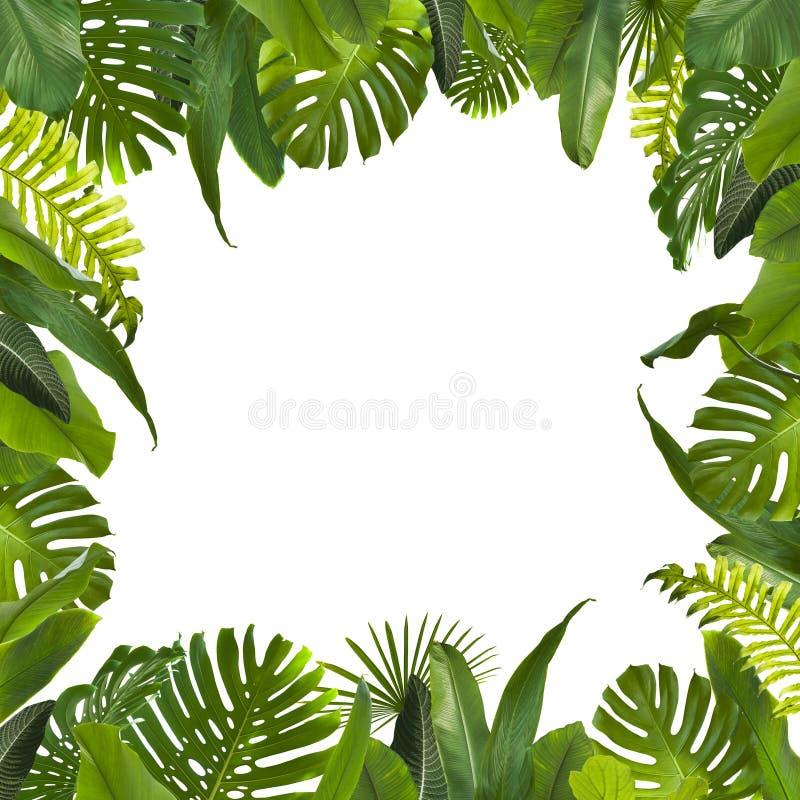 La selva tropical sale del fondo foto de archivo libre de regalías