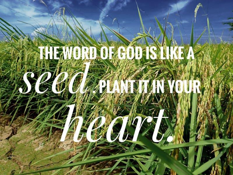 La semilla de dios de palabras del verso de la biblia del día, se anime en el diseño de la vida de cada día para el cristianismo foto de archivo libre de regalías