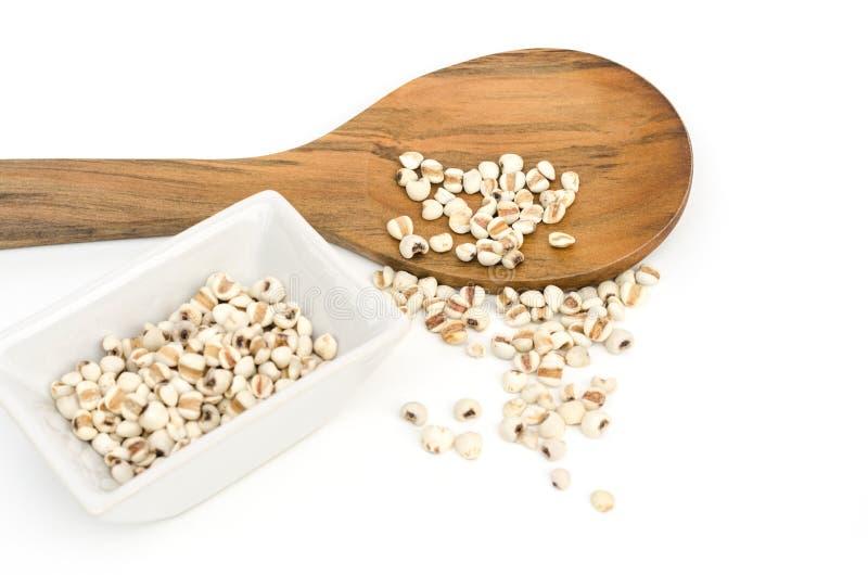 La semilla del grano de los rasgones del trabajo en el cuenco blanco y desborda la cuchara imágenes de archivo libres de regalías