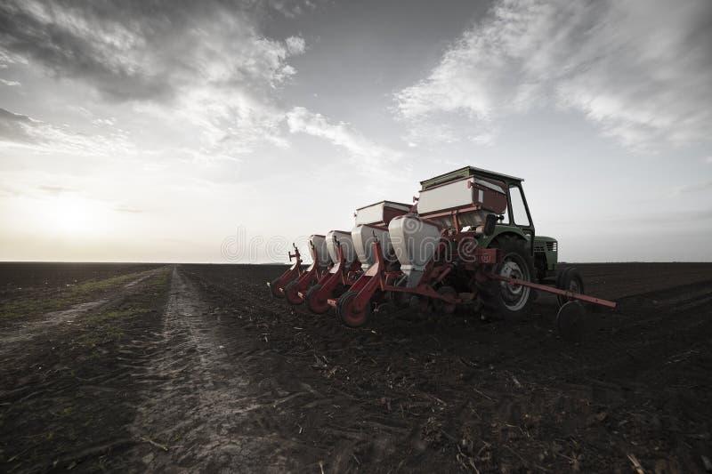 La semina dei raccolti ai campi agricoli in primavera immagine stock