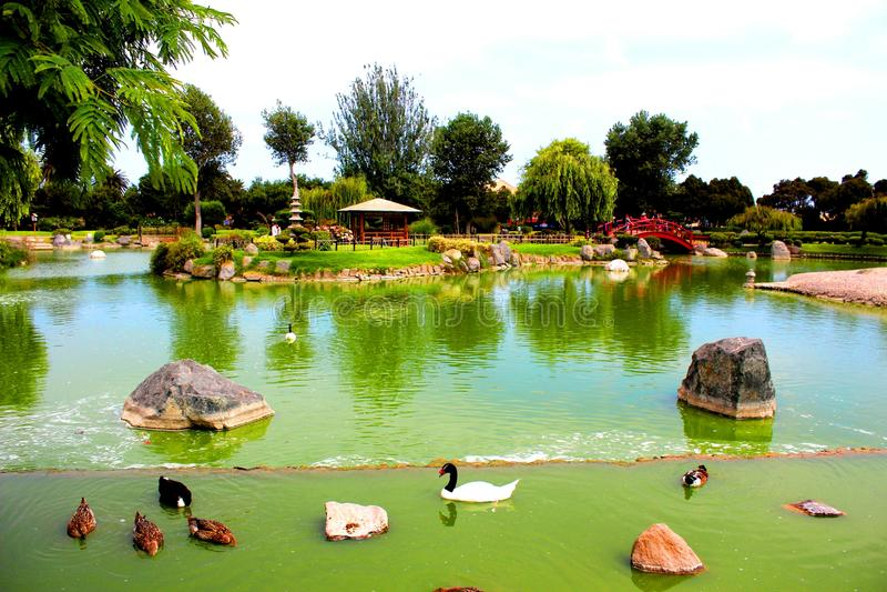 La Serena Chile del giardino del Giappone del lago immagine stock