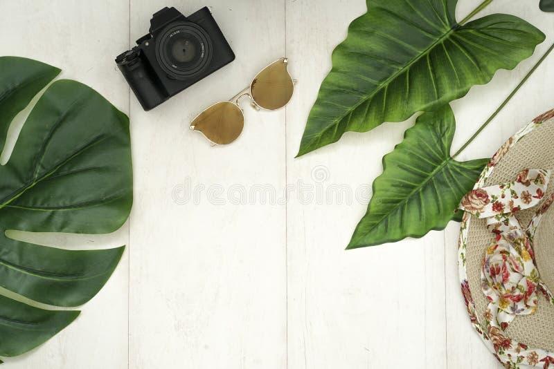 La sessione tropicale fotografia stock
