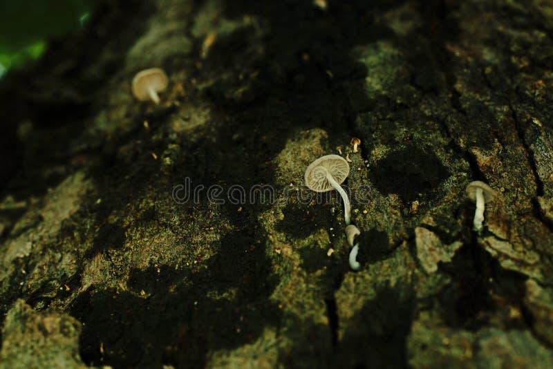 La seta crece en corteza del ` s del árbol fotos de archivo