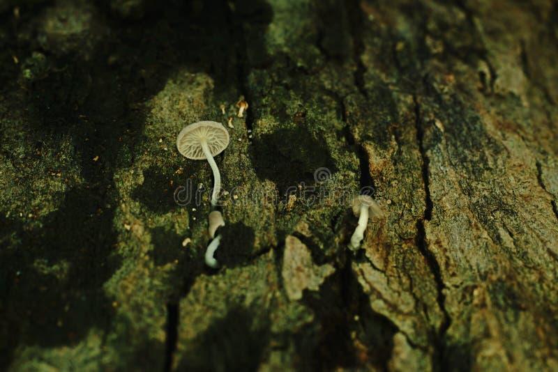 La seta crece en corteza del ` s del árbol foto de archivo libre de regalías