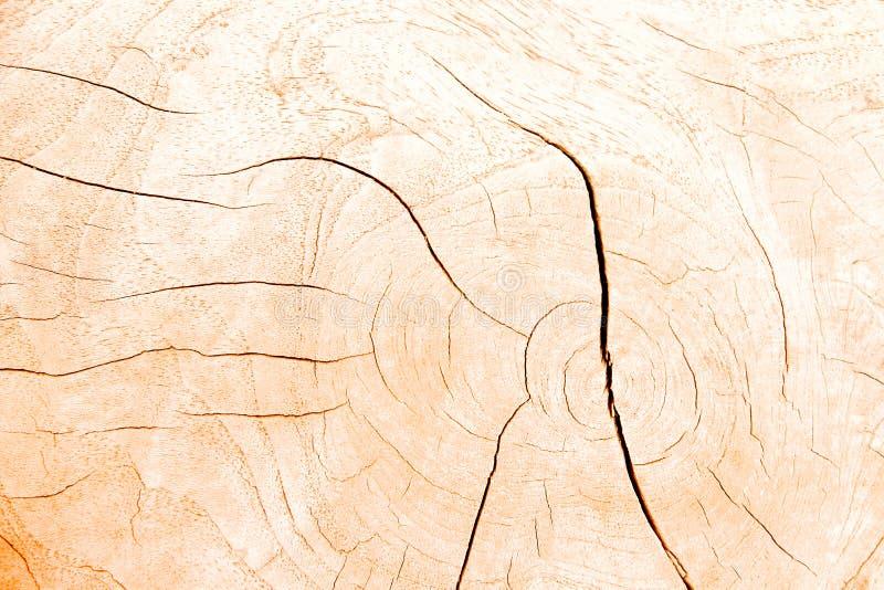 La sezione trasversale di legno marrone chiaro suona la struttura della natura con la linea ha fenduto i modelli del fondo del tr fotografia stock libera da diritti