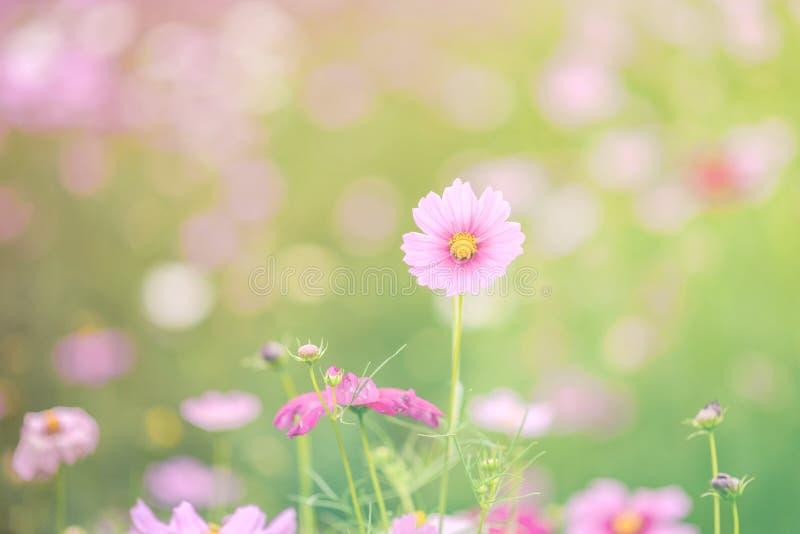 , la sfuocatura fiorisce per fondo, universo fiorisce il fondo nello stile d'annata immagine stock libera da diritti