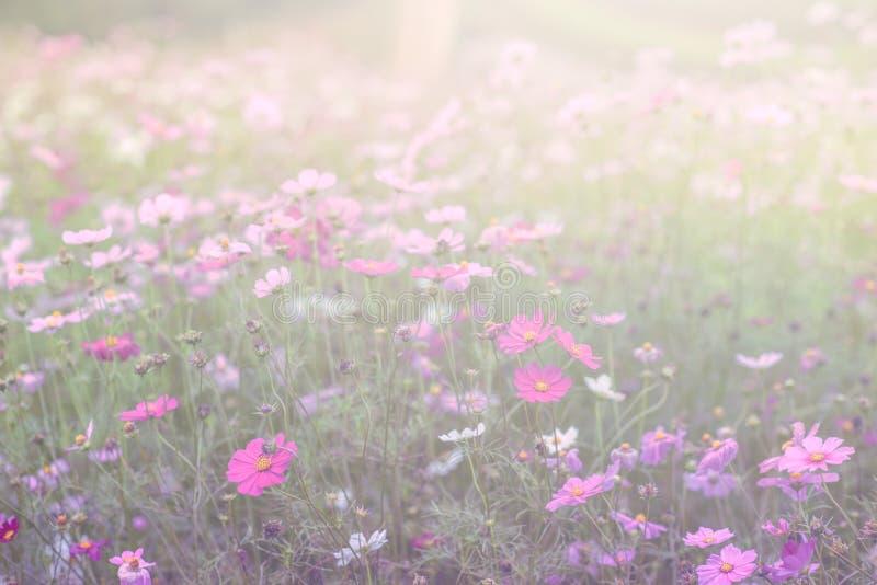 , la sfuocatura fiorisce per fondo, universo fiorisce il fondo nello stile d'annata fotografia stock