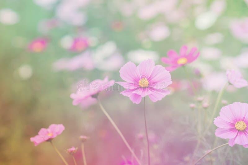 , la sfuocatura fiorisce per fondo, universo fiorisce il fondo nello stile d'annata immagine stock
