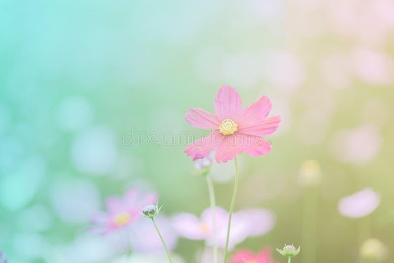 , la sfuocatura fiorisce per fondo, universo fiorisce il fondo nello stile d'annata immagini stock libere da diritti