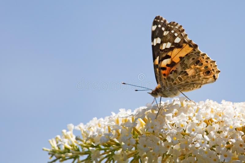 la signora della farfalla ha verniciato immagini stock libere da diritti