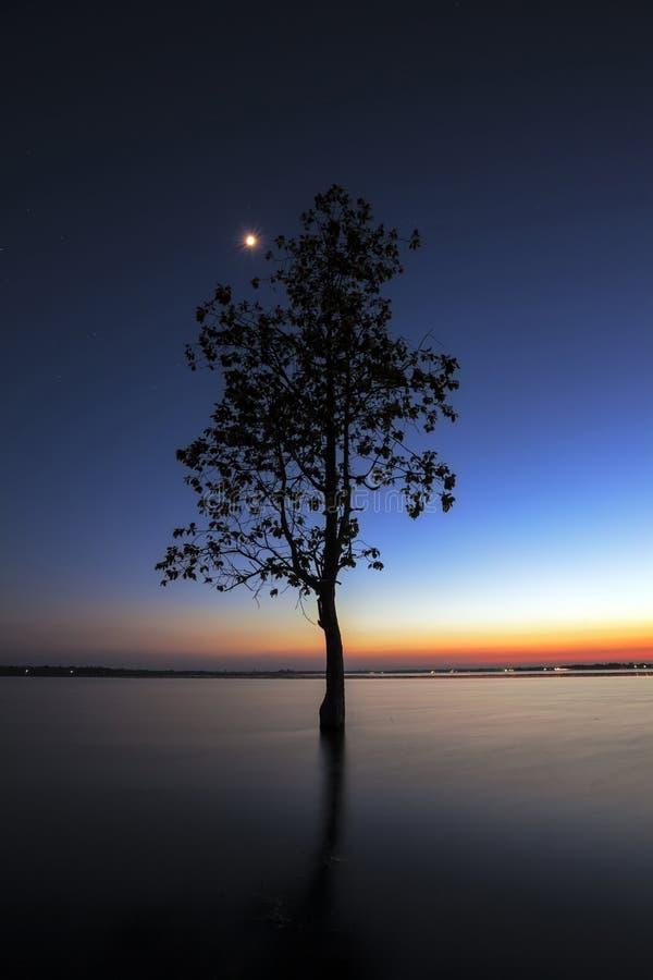 La silhouette d'arbre se penchant au-dessus du lac dans Surin photographie stock libre de droits